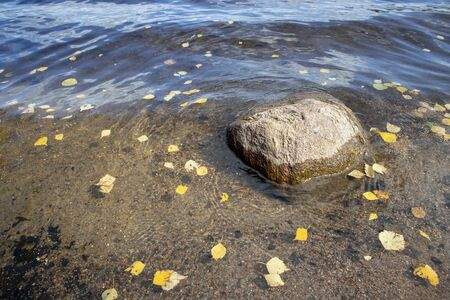 birch leaves floating on a lake, Finland