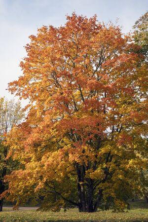 autumn scenery in city park, Lappeenranta Finland Imagens - 132790934