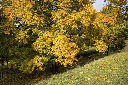 autumn scenery in city park, Lappeenranta Finland Imagens - 131800685