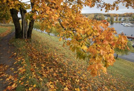 autumn scenery in city park, Lappeenranta Finland
