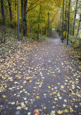 empty autumnal path in city park, Lappeenranta Finland