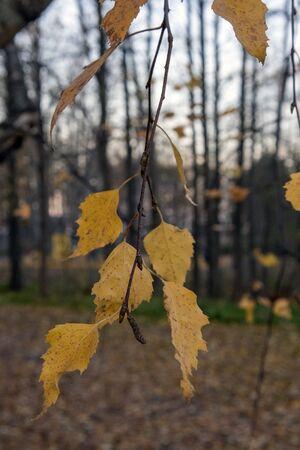 autumn foliage in city park, Lappeenranta Finland Imagens - 132673726
