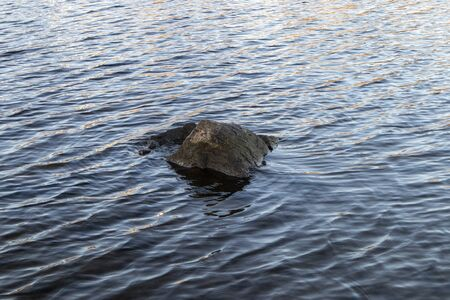 rock peaking out of water Imagens - 132673481