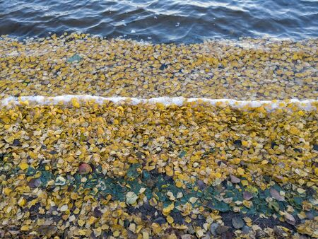 shore with golden autumn leaves, Finland