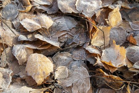frosty autumnal leaves on ground
