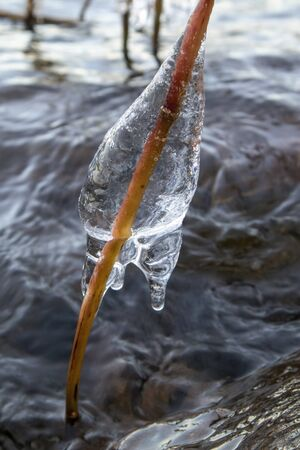 plants covered with ice when the lake start freezing over, Finland Imagens