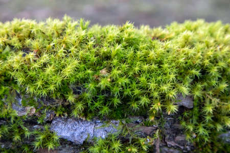 Moss growth on tree branch