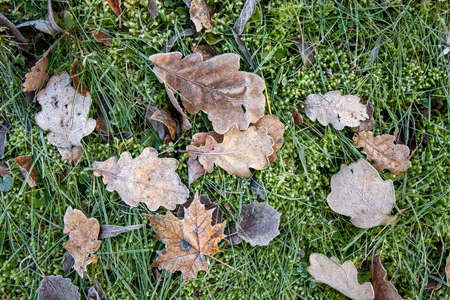 frosty leaves on ground