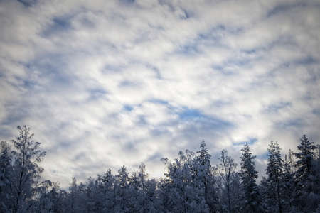 Cloudy winter sky with snow covered tree tops