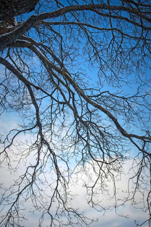 Bare tree branches against sky at winter Imagens