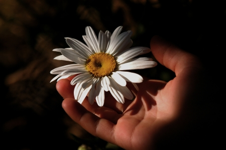 in a handful of daisies