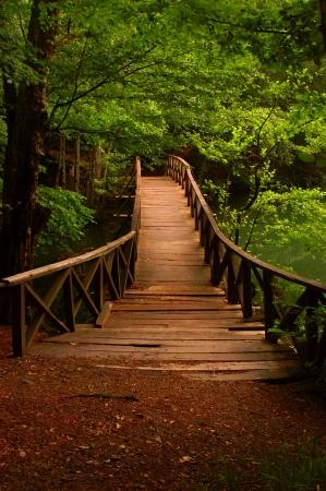 Holzbr�cke im Wald Lizenzfreie Bilder