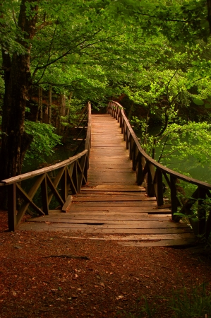 wooden bridge in the woods photo