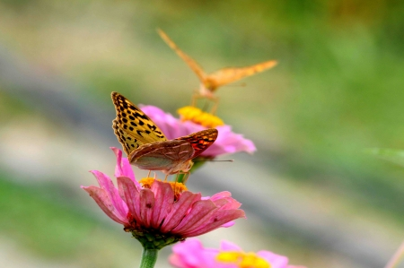 two butterfly sitting on flower, very colorful background