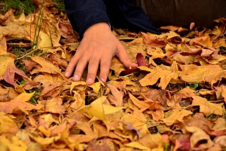 vivid autumn leaves fallen on the ground Stock Photo - 16259766