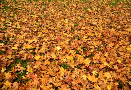 vivid autumn leaves fallen on the ground Stock Photo
