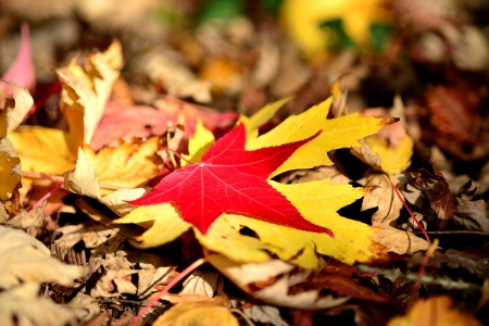 vivid autumn leaves fallen on the ground Stock Photo - 16259743