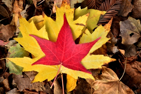 vivid autumn leaves fallen on the ground Stock Photo - 16259765