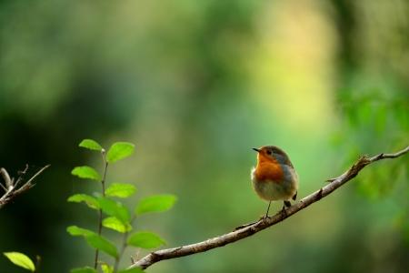 el retrato de un pájaro pequeño y fantástico