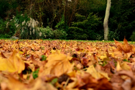 vivid autumn leaves fallen on the ground Stock Photo - 16259767