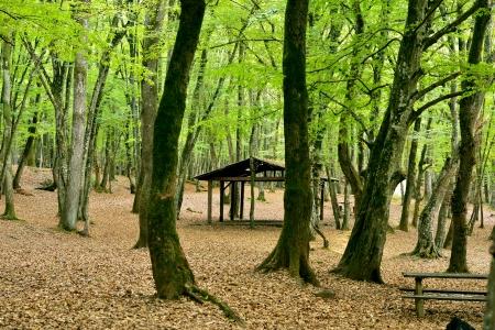 Laub und ruhig Herbstlandschaft Lizenzfreie Bilder