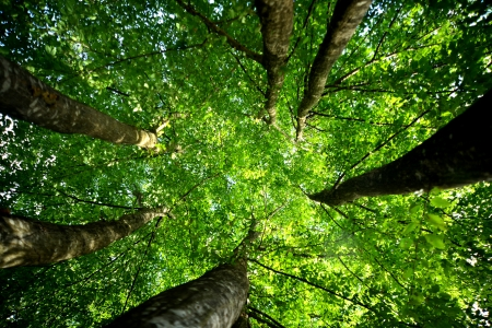 of young trees, forest views Stock Photo - 16259778