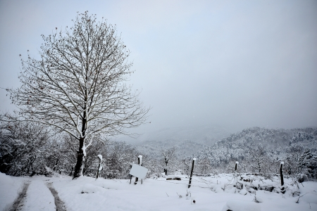 winter scenery, Snow on trees Stock Photo - 17346878