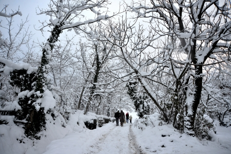 winter scenery, Snow on trees Stock Photo - 17346879