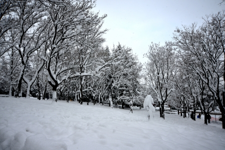 winter scenery, Snow on trees Stock Photo - 17346880