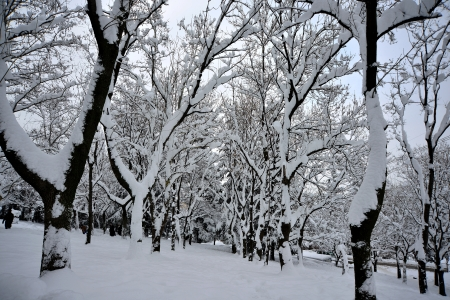 winter scenery, Snow on trees Stock Photo - 17346882