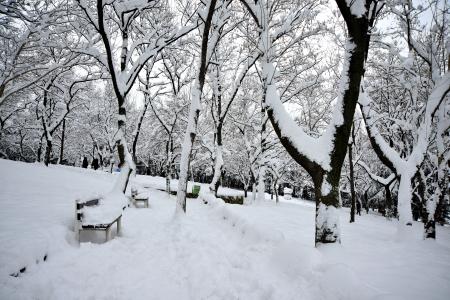 winter scenery, Snow on trees Stock Photo - 17346881