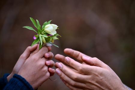 Hand und Blumen zu schenken, konzeptionelle Lizenzfreie Bilder