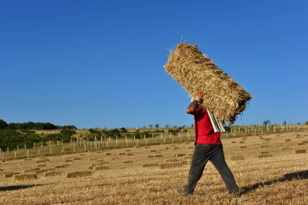 bale: people living with straw on his back