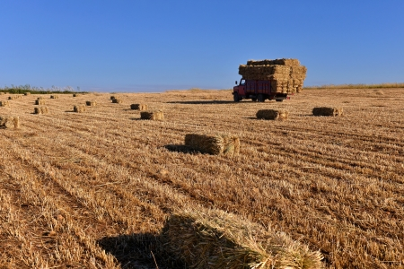 bale: Bales of hay being transported