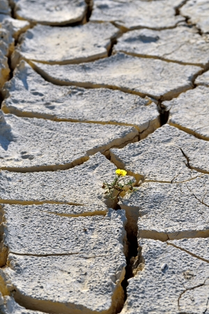 flower in dried cracked mud photo
