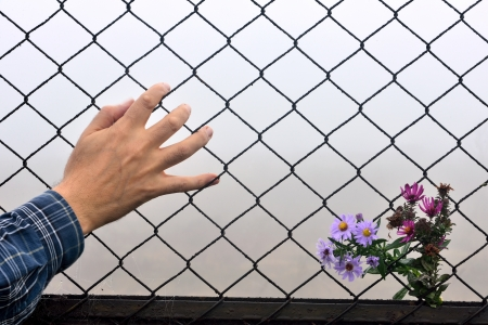 entered: have entered the flower fence and the human hand