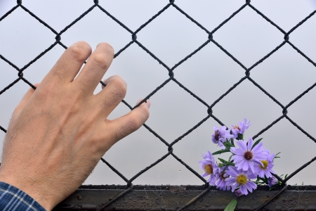 have entered the flower fence and the human hand photo