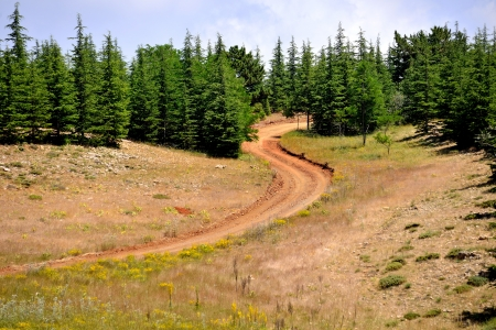 advancing: advancing into the forest paths