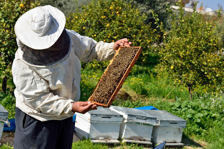 in the hands of beekeeper holding honeycomb photo