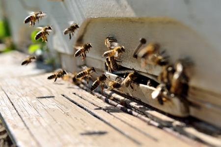 familia animada: abejas volando delante de una colmena