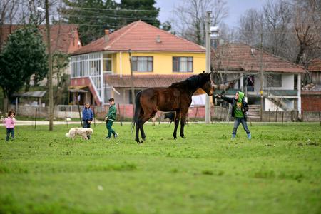 caresses: SAKARYA , TURKEY - FEBRUARY 4, 2013  Undefined appearing in Sakarya children in rural areas with animals on February 4, 2013, in Turkey  Sakarya region of Turkey is one of the wettest