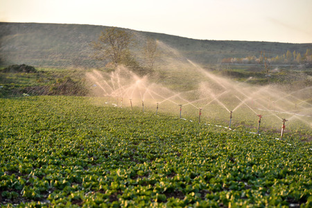 agriculture machinery: Agriculture water spray, irrigation of vegetables