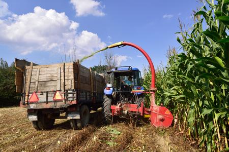 an agricultural district: BOLU, TURKEY - SEPTEMBER 15, 2015: Harvesting corn for livestock silage on september 15, 2015 Bolu, Turkey