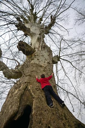 niño trepando: Vista por debajo del pleno del muchacho joven que sube el árbol grande