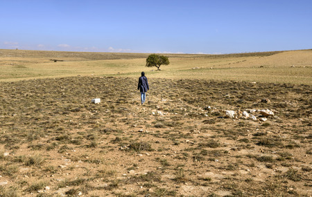 single tree: woman walking toward a single tree in the countryside