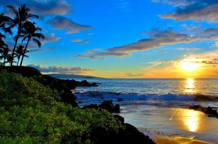 Maui Beach Sunset with palm trees and foliage photo