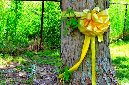 Yellow Ribbon tied around a Maple Tree