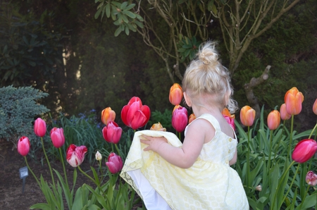 blond haired: Curly blond haired toddler looking at colorful tulips