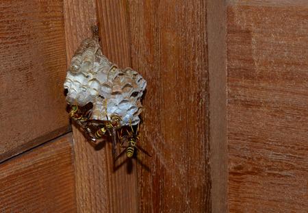 build buzz: Wasp laying agg larvae