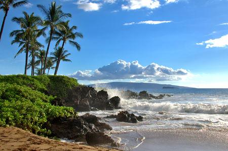 야자수와 열대 하와이 해변